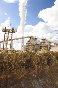 Sweet Sorghum Processed to Ethanol in Brazil